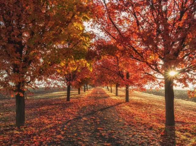 Autumn/Winter Bucket List:)