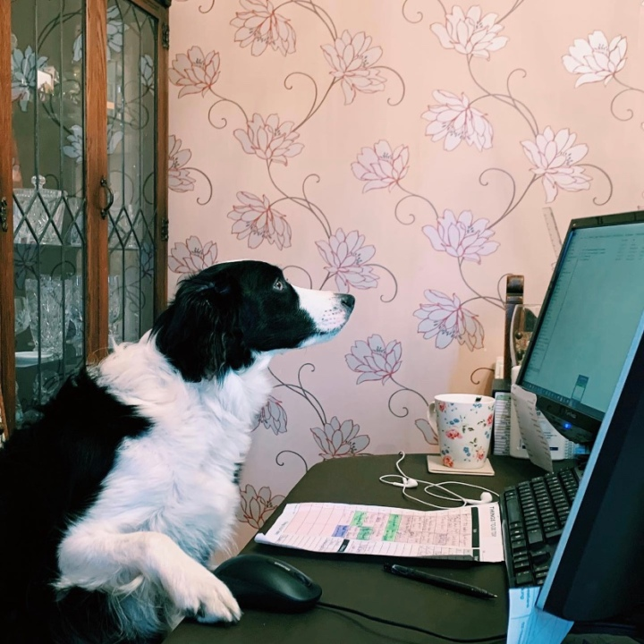 Working from home with apuppy!
